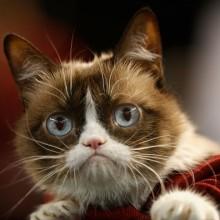 ダイヤモンドバックス戦で「世界一ネガティブなネコ」が始球式