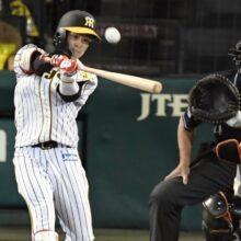 金村義明氏、阪神・中野を絶賛「ルーキーとは思えない」